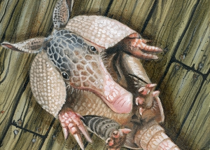 little-armadillo-oliver-ende-2013